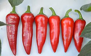 Flaming Flare Fresno Pepper