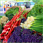 Rich and Vibrant Varieties Selected for Success