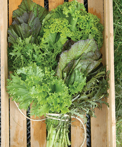 This bunch of mustard greens includes a selection of green and red, traditional and Asian varieties.