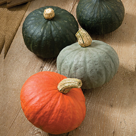 How to Grow Kabocha Winter Squash
