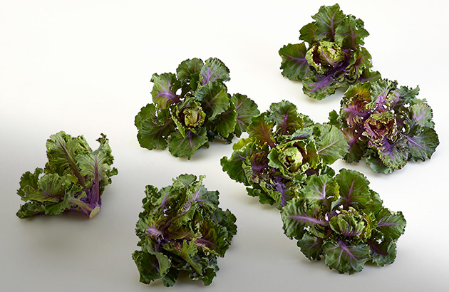 Kalettes — from Johnny's