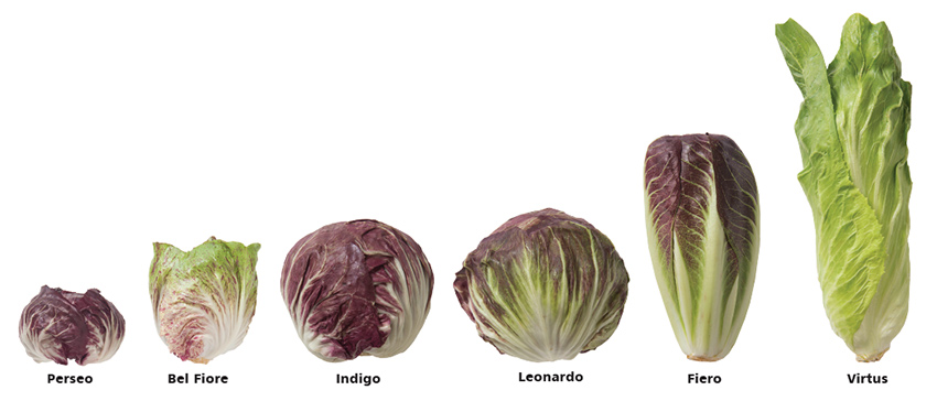 Johnny's Radicchio Types