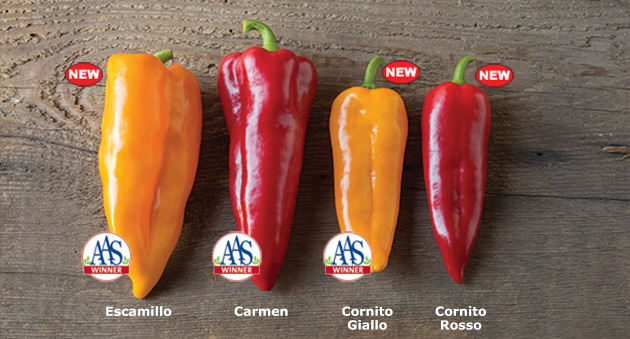 Johnny's AAS-Winning Corno di Toro Peppers