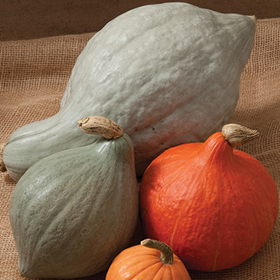 How to Grow Hubbard Winter Squash