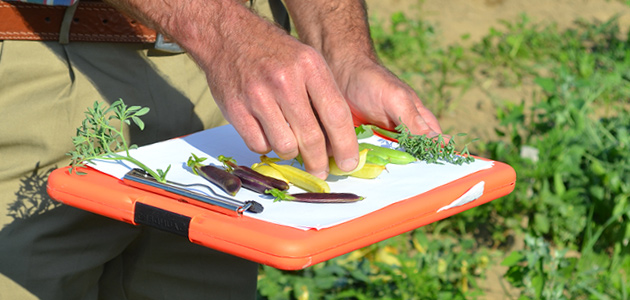 how to conduct a successful variety trial at your farm