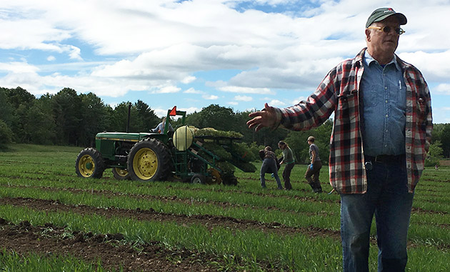 Eero Ruuttila explains Cover Cropping in the trialing fields