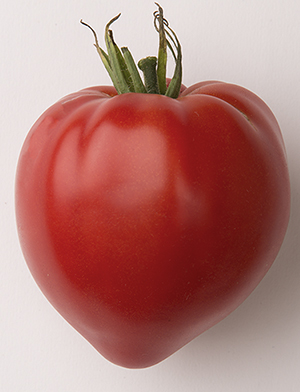 Cauralina oxheart French Heritage tomato