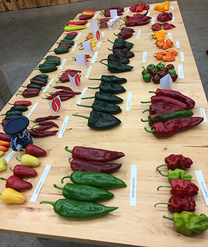 Johnny's annual Hot Pepper Palooza