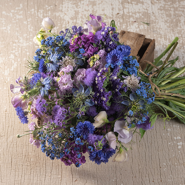 Shop BLUE Flowers