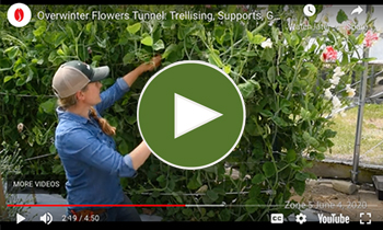 View Our Overwinter Flower Tunnel Trellising, Ground Cover & Spacing Video