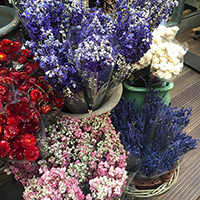 Amsterdam public flower market
