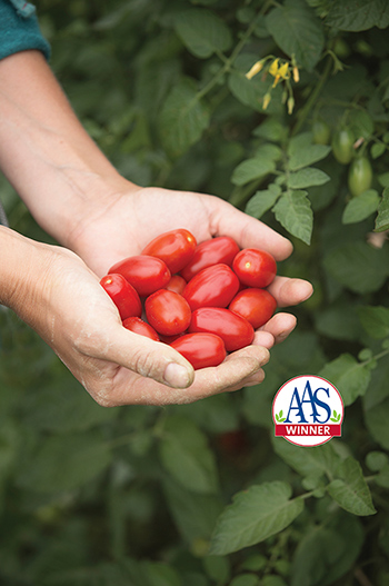Johnny's 2018 AAS Award-Winning Grape Tomato, 'Valentine,' the 'Queen of Hearts for Grape Tomatoes.'
