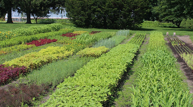 Succession Planting for Cut Flowers - Planning & Frequency for Abundant Harvests