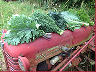 Selwood Greens Harvest