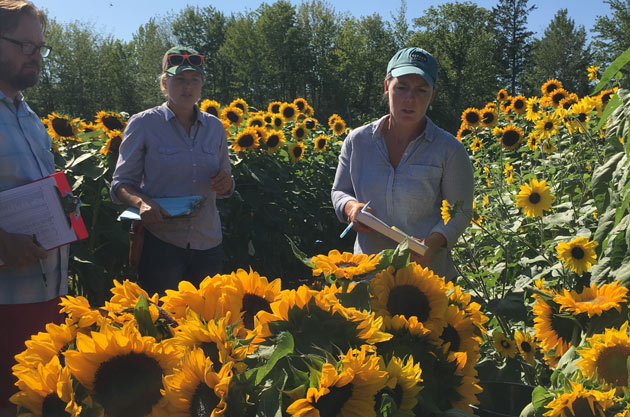Learn how to choose the right sunflower varieties for your needs
