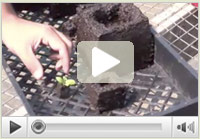 Watch the soil-block video!