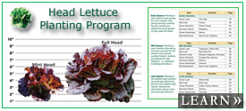 Lettuce Planting Program for All Markets & Seasons