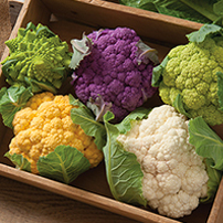 Cauliflower Planting Program