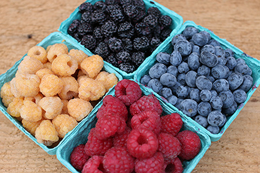 Try our Fruit Collections for reliable, season-wide harvesting
