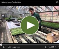 Video on Microgreens ROI, by Thomas Macy