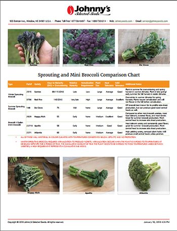 Refer to our Mini & Sprouting Broccoli Comparison Chart for more details on timing your planting program.