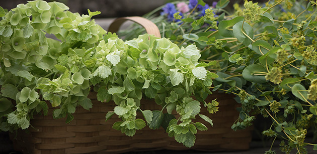 Fillers & foliage form the backbone of floral arrangements and garlands