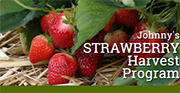 Strawberry Harvest Program