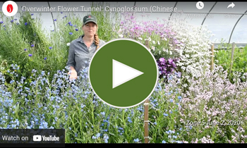 View Our Overwinter Flower Tunnel Cynoglossum Video