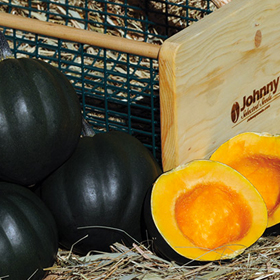 How to Grow Acorn Winter Squash