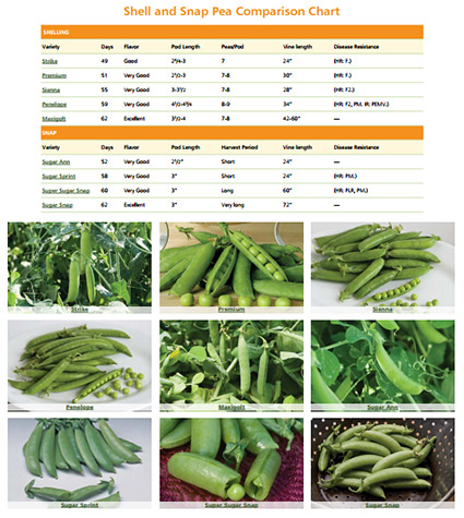 Dynamic Snap & Shell Pea Comparison