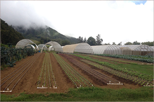 Irrigated Fields - Hawai'i