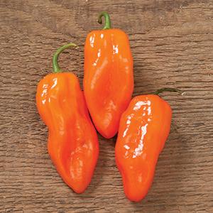Helios Habanero Pepper