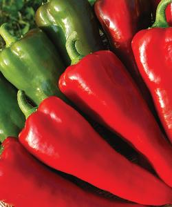 Carmen Sweet Specialty Pepper