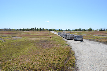 Rented honeybee hives stocked in a commercial blueberry barren in Maine