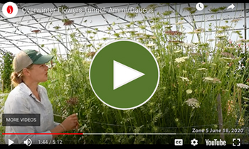 View Our Overwinter Flower Tunnel Ammi/Daucus Video