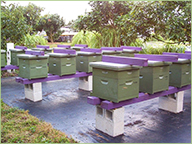 Gabriele's beehives