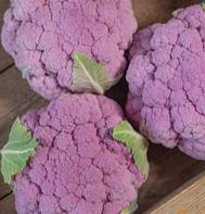 Lavender Cauliflower
