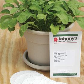 How to Grow Arugula Seed Disks