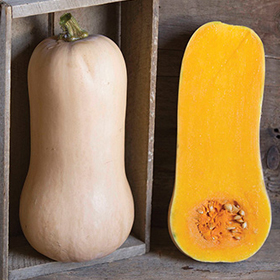 How to Grow Butternut Winter Sqush