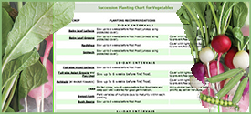 Interval Planting Chart for Vegetables