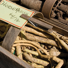 How to Grow Horseradish