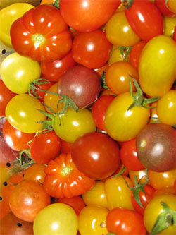 Colorful mix of cherry tomatoes and other specialty types