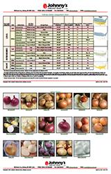 Full-size Onion Comparison Chart