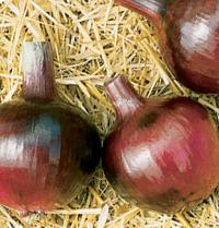 Redwing Storage Onion