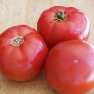 Semideterminate tomato BHN 589