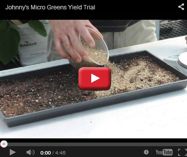 Microgreens Yield Trial