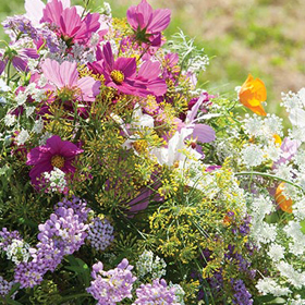 How to Grow Beneficial Insect Attractant Flower Mix