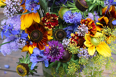 Bouquet with depetaled Rudbeckia hirta
