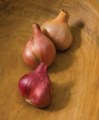 Three types of shallots with different characteristics, including earliness, flavor profile, and storage potential.