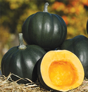Honey Bear acorn squash
